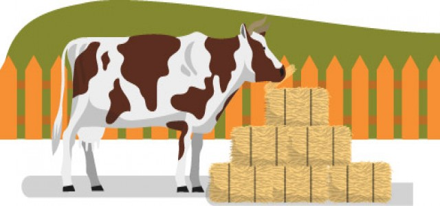 Feed Mycotoxin Binders Market Growth Promoters, Industry